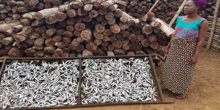Jeanne Amématsro (Fumeuse de poissons) au milieu des bois devant servir à fumer du poisson